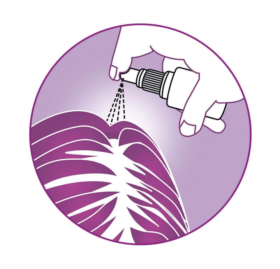 REGAINE® FRAUEN Lösung Pumpspray